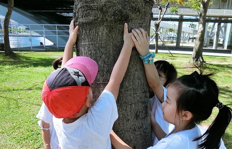 觸摸樹幹的感覺